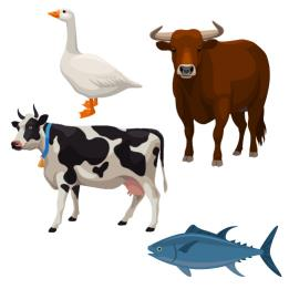 Unit 8: Farm animals